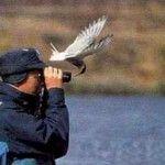 Vacanze tra la natura e il birdwatching